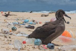 Pájaro rodeado de plástico