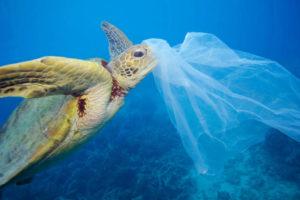 Tortuga con bolsa de plástico