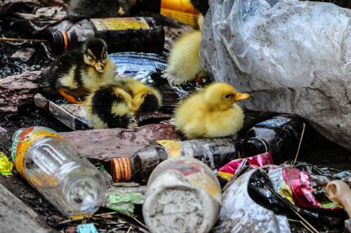 Nuestro planeta se está ahogando con la cantidad de plástico que desechamos cada día. Se calcula que solo en España se consumen 3.500 millones de botellas de plástico al año. Muchas de ellas terminan en los parajes naturales de nuestro país y en el mediterráneo, afectando gravemente la salud de los animales que viven allí.