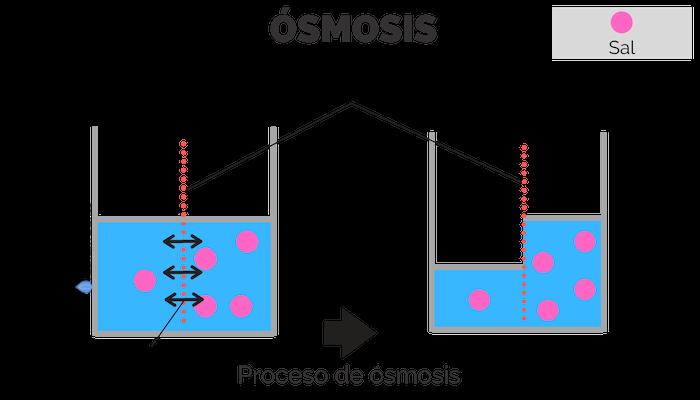 Proceso de ósmosis
